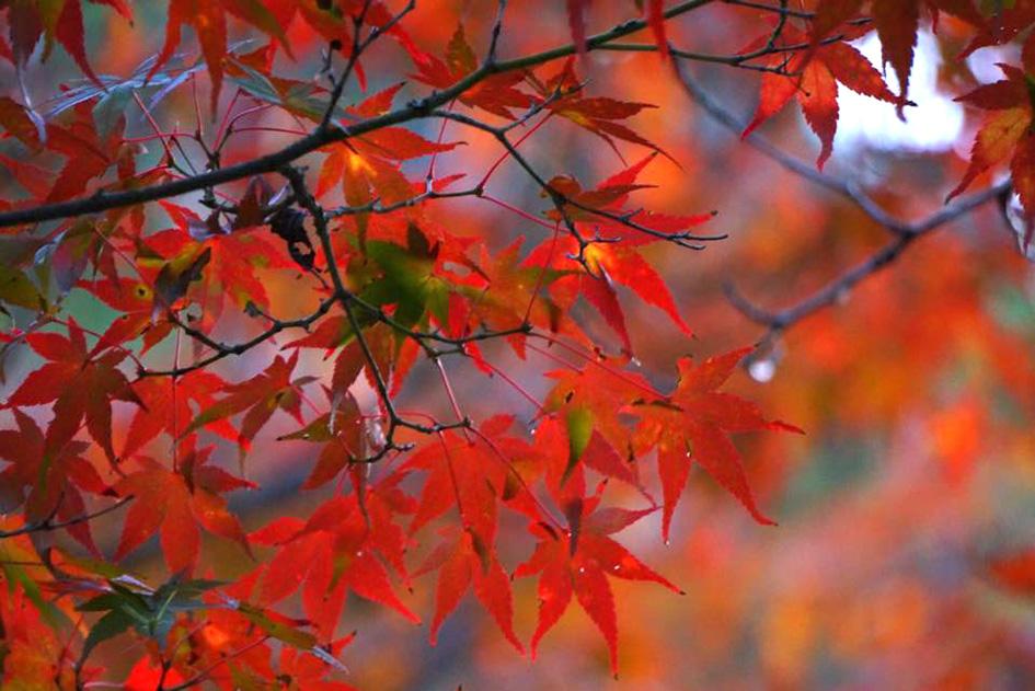 カメラが趣味の友人、豊田映里奈さんが撮ってくれた紅葉の写真